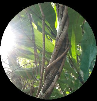 Аяхуаска - сила, способная открыть новые пути развития