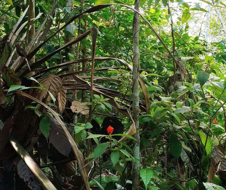 аяваска и джунгли